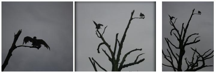 birdsdrying